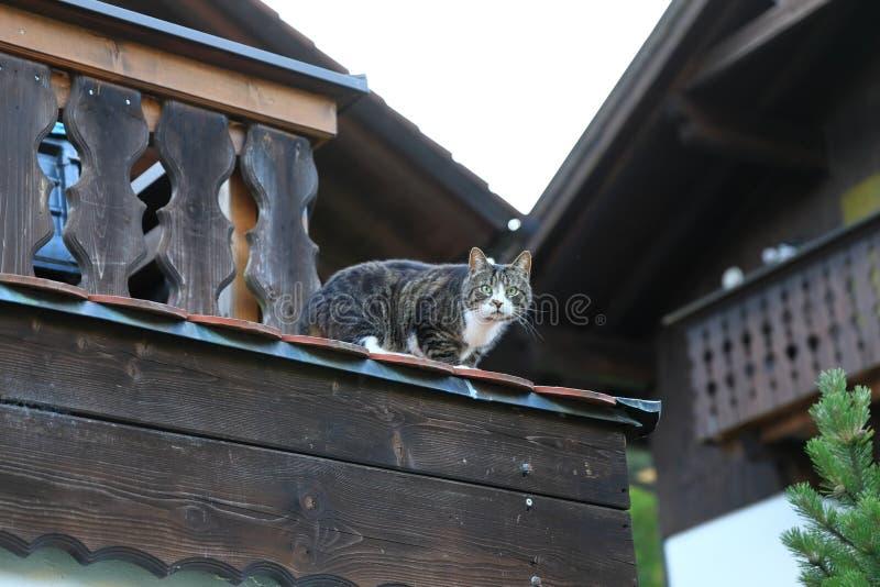Czelny wiejski kota obsiadanie na dachu fotografia stock