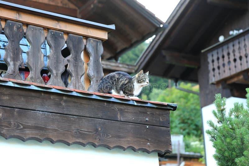 Czelny wiejski kota obsiadanie na dachu obraz royalty free
