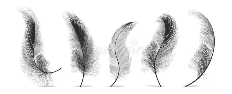 Czerń piórko Ustawiający wektor Piórkowy ptak, Miękki pióropuszu projekt button ręce s push odizolowana początku ilustracyjna kob ilustracji