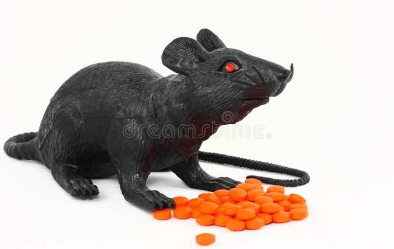 czerń narkotyzuje szczura zdjęcia stock