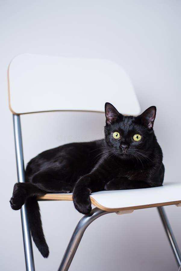 Czerń przyglądający się kot na białym tle fotografia stock