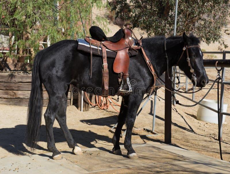 Czerń siodłający koń zdjęcia royalty free