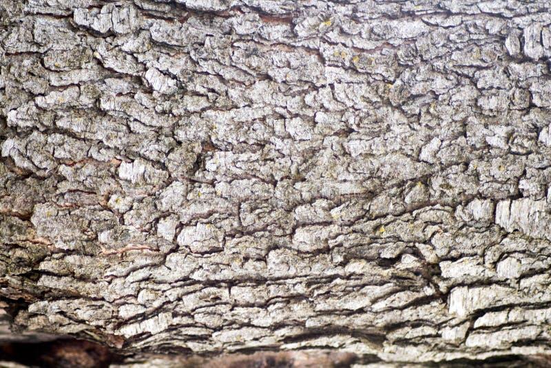 Czereśniowa Drzewna barkentyna obrazy stock