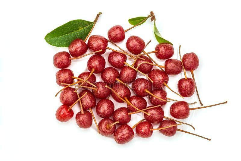 Czereśniowe silverberry jagody Zakończenie strzał fotografia stock