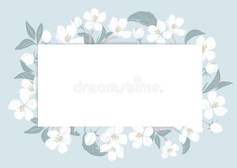 Czereśniowego okwitnięcia karty szablon z tekstem Kwiecista rama na pastelowym błękitnym tle bia?e kwiaty r?wnie? zwr?ci? corel i royalty ilustracja