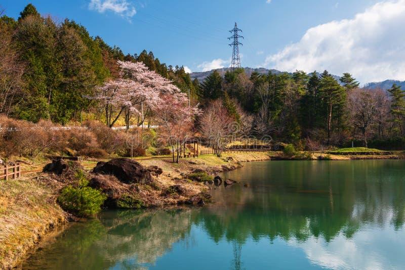 Czereśniowego okwitnięcia park przy Kiso doliną obraz royalty free