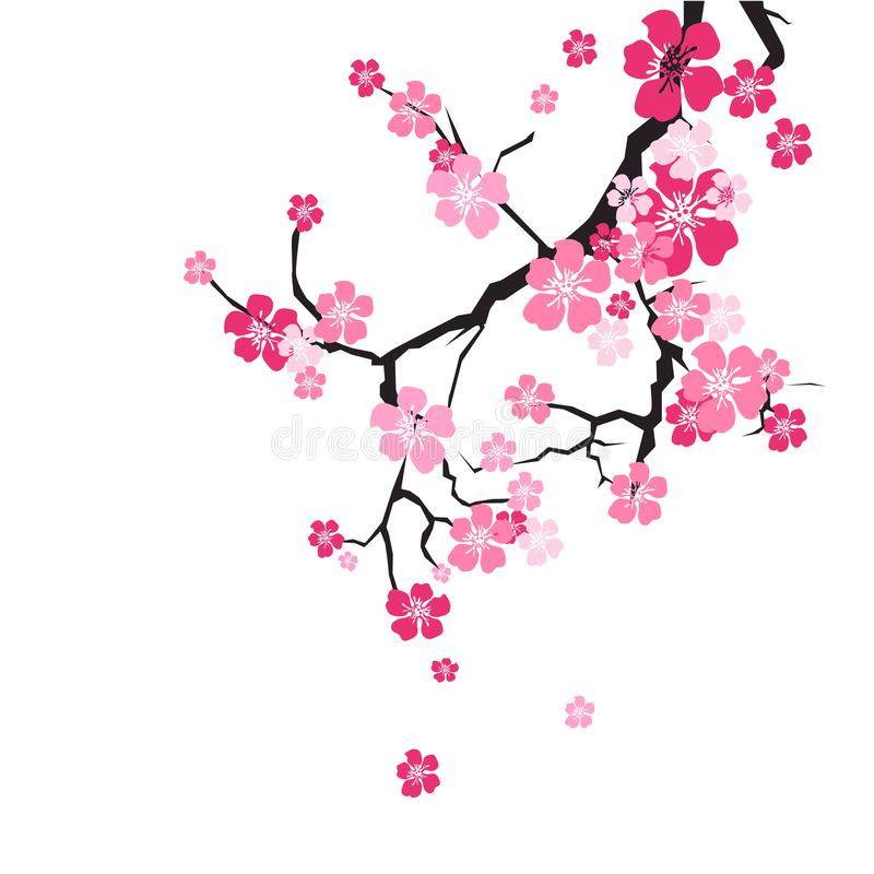 Czereśniowego okwitnięcia tła Sakura kwiatów menchie Na gałąź royalty ilustracja