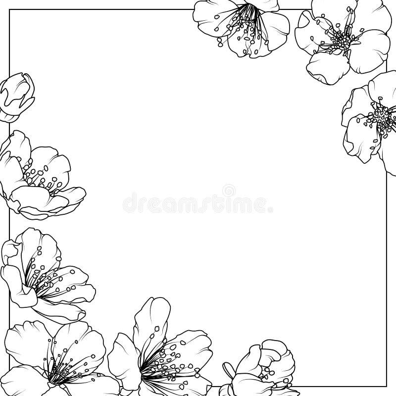Czereśniowego Sakura aliche wiosny kwiatów drzewna rama royalty ilustracja