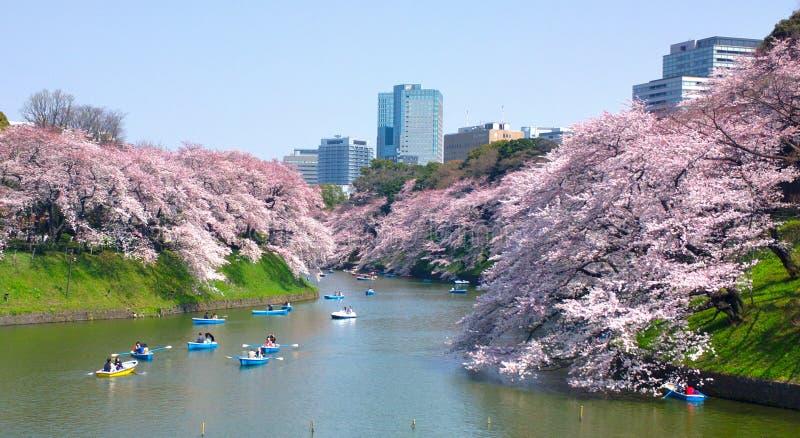Czereśniowi okwitnięcia przy Chidorigafuchi w TOKIO JAPONIA fotografia royalty free