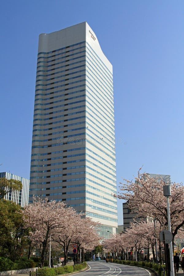 Czereśniowi okwitnięcia przy Sakura dori aleją w Yokohama obrazy royalty free