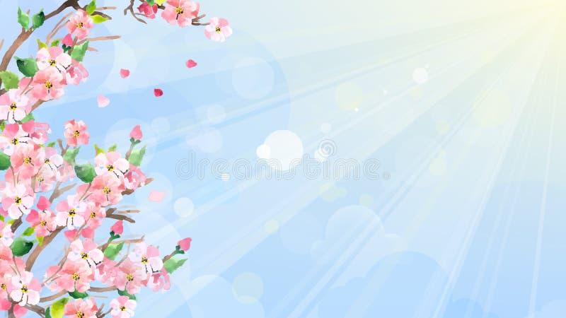 Czereśniowi okwitnięcia, wiosny tło Wektorowy akwareli te royalty ilustracja