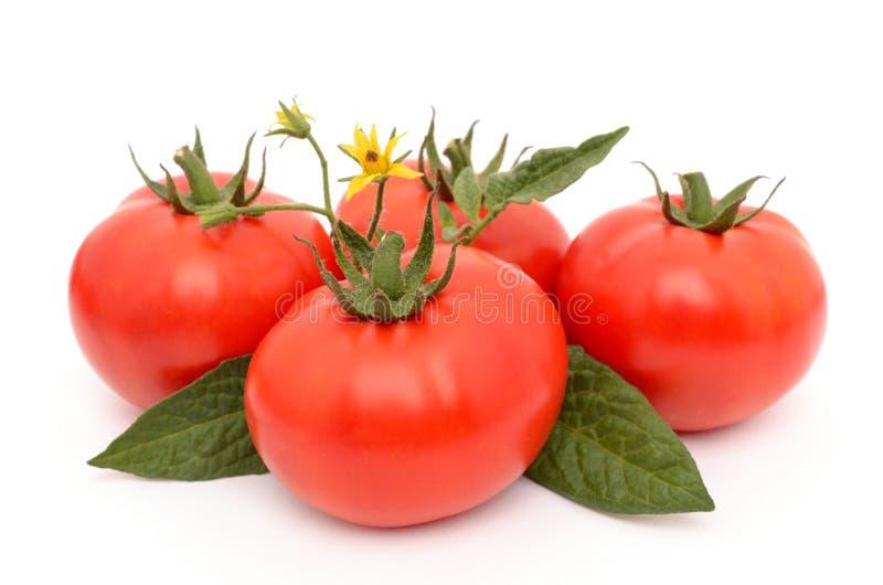Czereśniowi pomidory na białym tle zdjęcie stock
