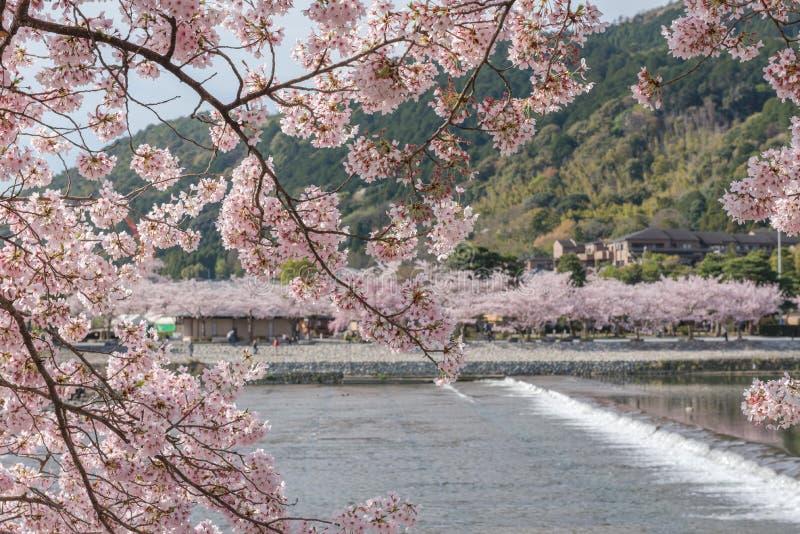 Czereśniowy okwitnięcie, Arashiyama w wiośnie, Kyoto, Japonia fotografia royalty free