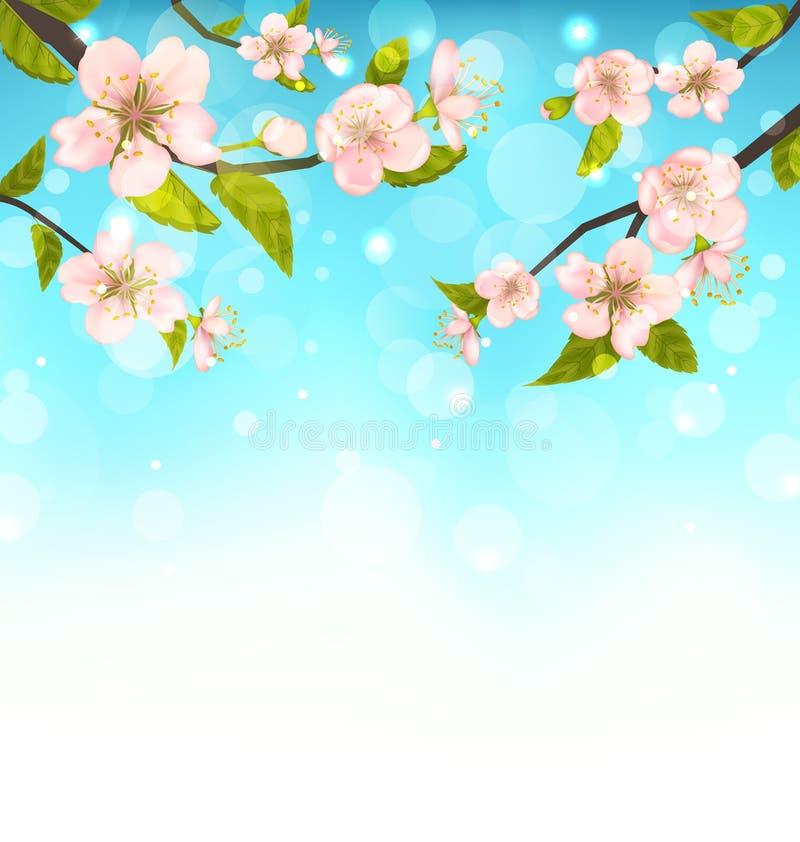 Czereśniowy okwitnięcie, gałąź drzewo, Naturalny Rozjarzony tło ilustracja wektor