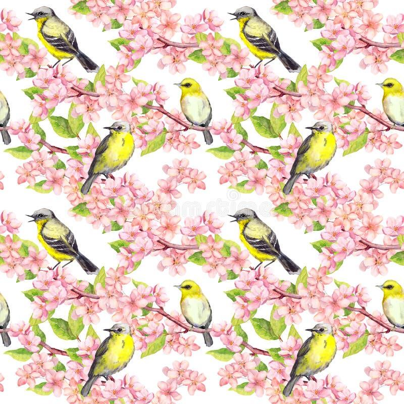 Czereśniowy okwitnięcie - jabłko, Sakura kwitnie, śliczni ptaki bezszwowy kwiecisty tła akwarela ilustracji