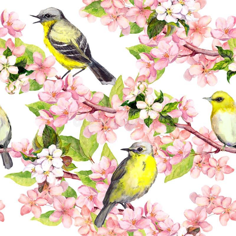 Czereśniowy okwitnięcie - jabłko, Sakura kwitnie, ptaki bezszwowy kwiecisty wzoru akwarela ilustracji