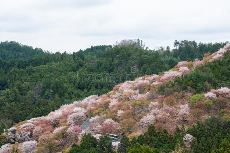 Czereśniowy okwitnięcie na Yoshinoyama, Nara, Japonia wiosny krajobraz obraz stock