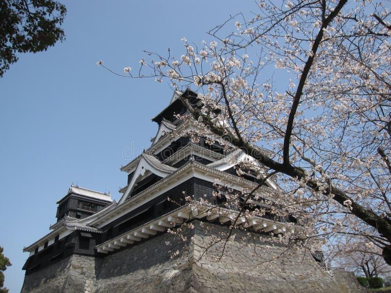 Czereśniowy okwitnięcie przed japończyka kasztelem zdjęcia stock