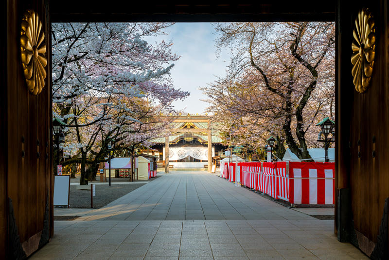 Czereśniowy okwitnięcie przy świątynią yasukuni, Tokio, Japonia sławny Touris obraz royalty free