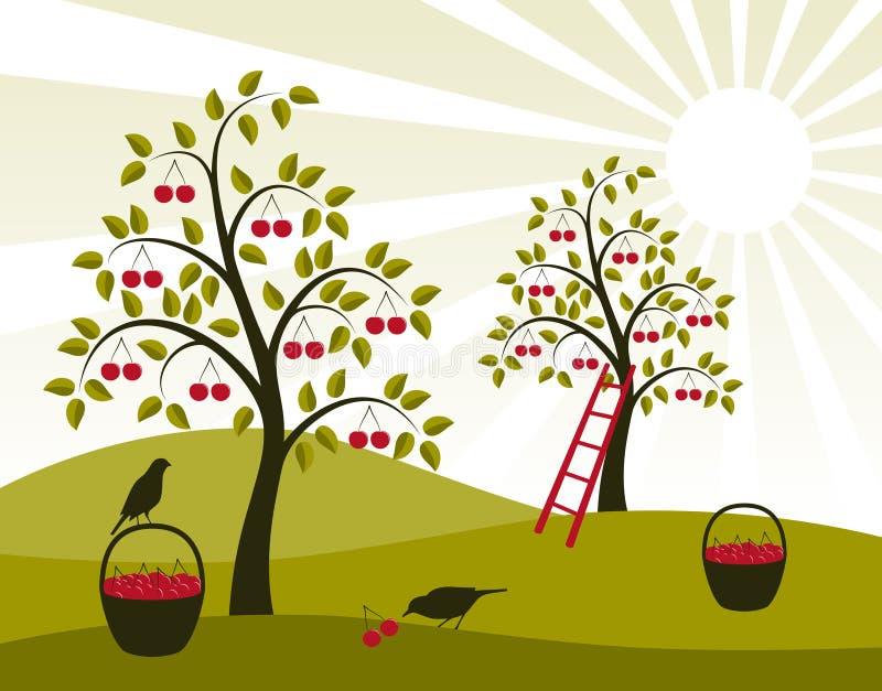 czereśniowy sad ilustracji