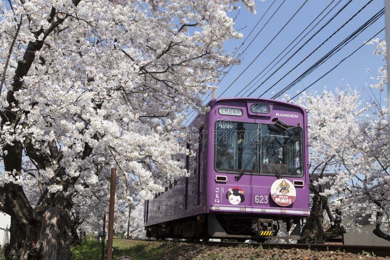 Czere?niowego okwitni?cia tunel, Keifuku linia, Arashiyama, Kyoto kolej i menchia poci?g obraz royalty free