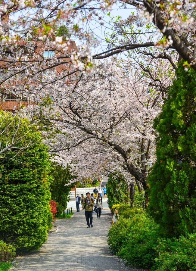 Czere?niowy okwitni?cie w Tokio, Japonia obrazy stock