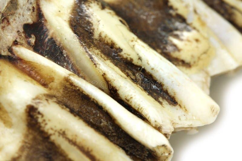 Czerep jawbone z zębu tłem zdjęcia royalty free