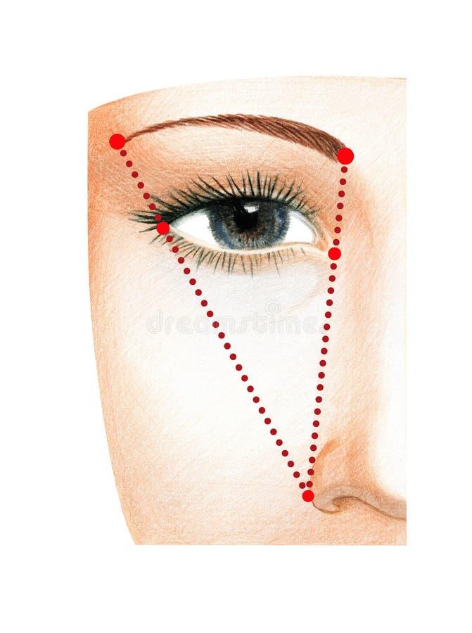 Czerep kobiety twarz z otwartymi oczami Plan budować idealną długość brew ilustracji