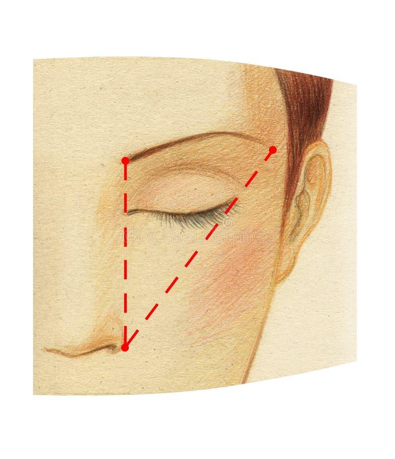 Czerep kobiety twarz z zamkniętymi oczami Plan budować idealną długość brew ilustracja wektor