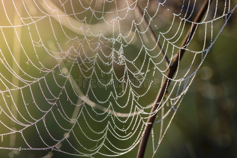 Czerep spiderweb przy świtem który zakrywa z rosa kroplami, zdjęcia stock