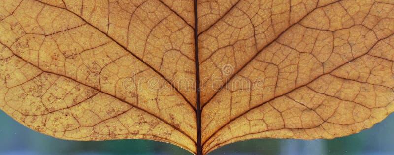 Czerep zamknięty w górę suchy liść Mikrokosmos, macrocosm, przestrzeń, wszechświat Natura fotografia royalty free