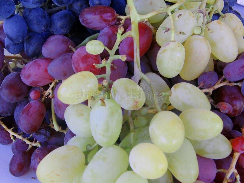 Czerni, czerwieni i bursztynu winogrona, fotografia royalty free