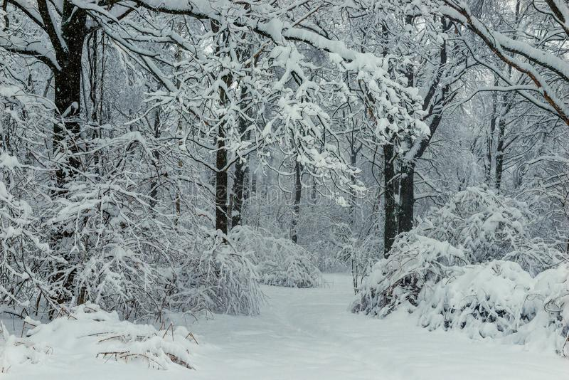 Czerni gałąź i biały śnieżny czarny i biały zima las obrazy royalty free