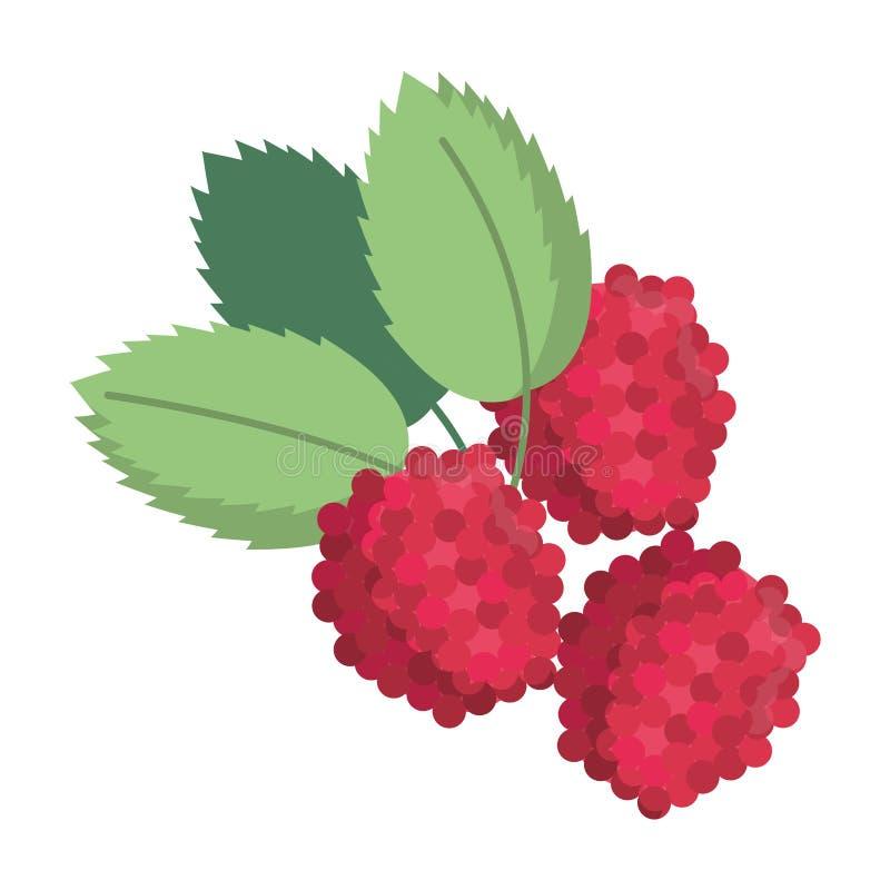 Czernicy owoc świeża żywność ilustracji