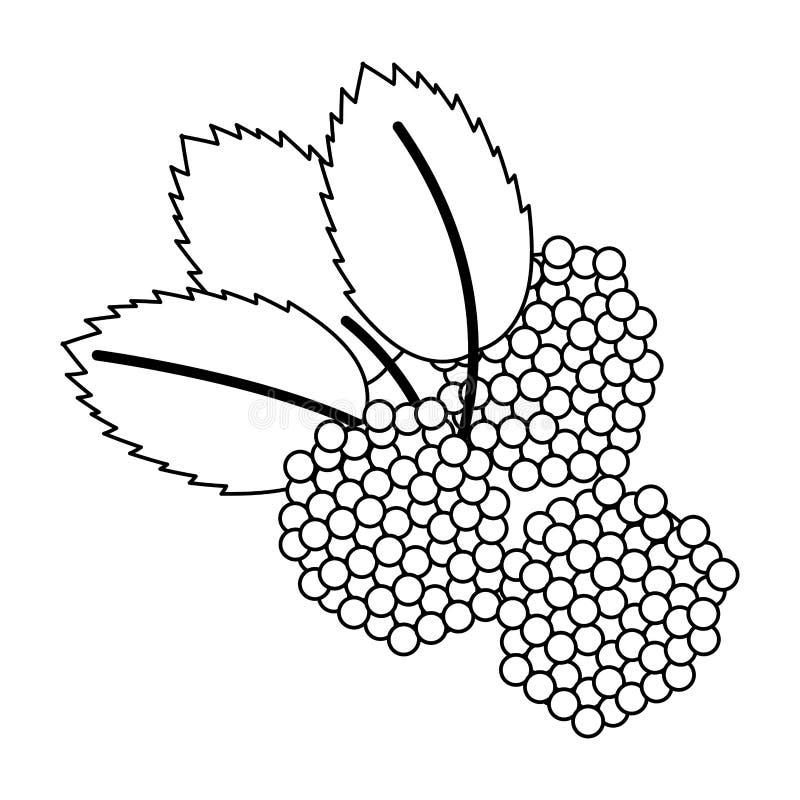 Czernicy owocowa świeża żywność w czarny i biały ilustracji
