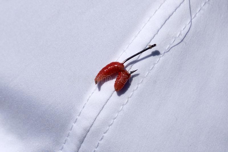 Czerw komarnicy larwa na połowu haczyka zakończeniu up z rozmytym zielonym tłem obrazy stock