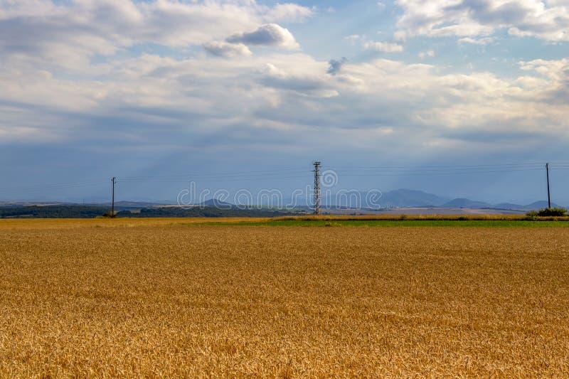 Czerwca pole uprawne z elektrycznymi słupami, sceniczny Południowy Bułgarski rolniczy widok zdjęcie stock