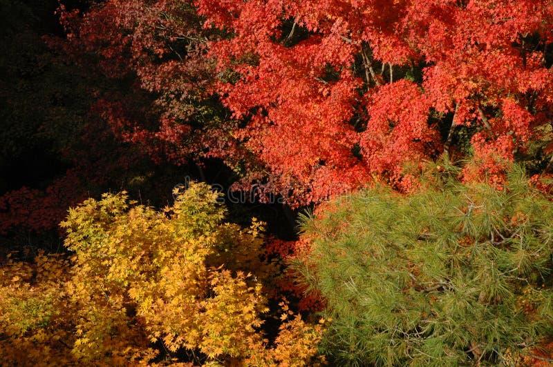 Czerwona żółta zieleń obraz stock