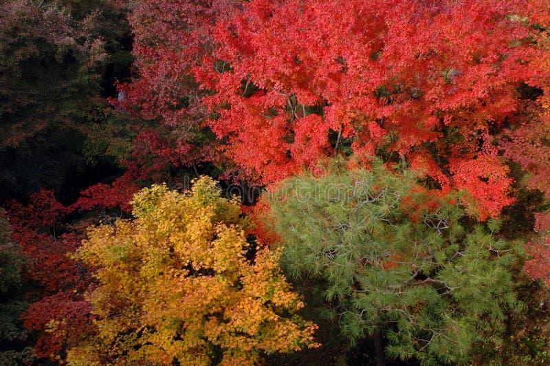 Czerwona żółta zieleń zdjęcia royalty free