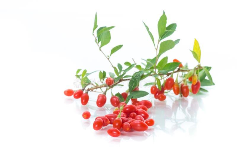 Czerwona dojrzała goji jagoda na gałąź odizolowywającej na bielu obraz royalty free