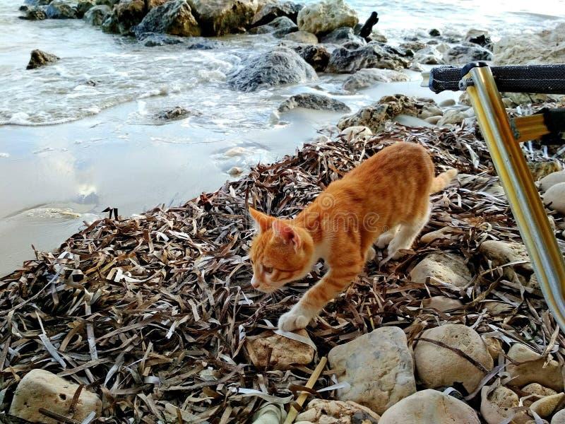 Czerwona figlarka na plaży zdjęcie stock