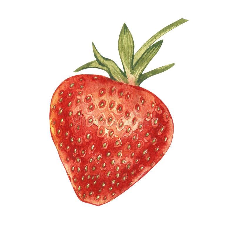 Czerwona jagodowa truskawka odizolowywająca na białym tle Ręka rysująca akwarela obrazu ilustracja jagody royalty ilustracja