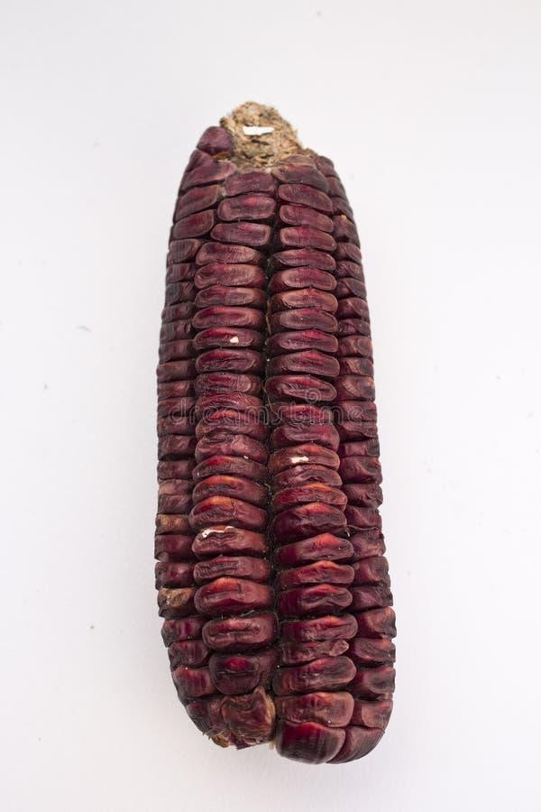 Czerwona kukurydza zdjęcia royalty free