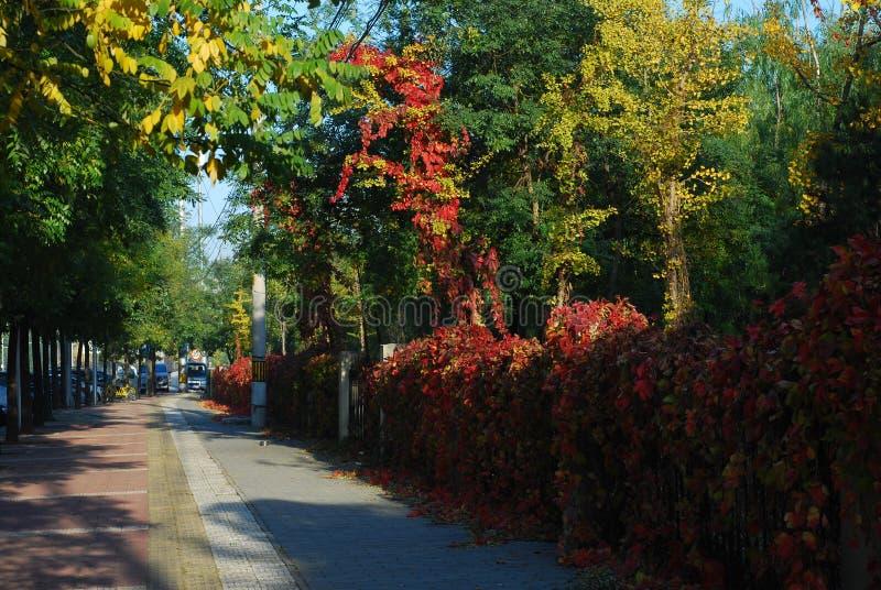 Czerwona liść ulica obrazy royalty free