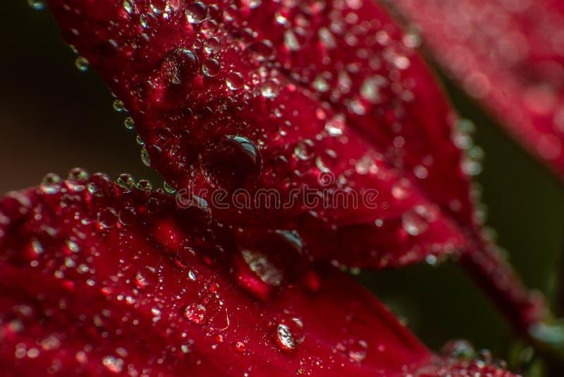 Czerwona natura fotografia royalty free