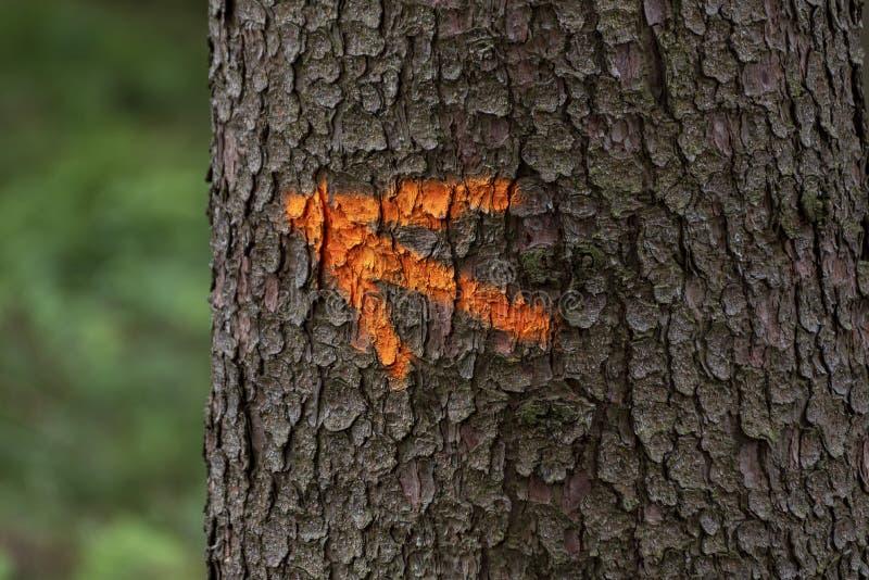 Czerwona ocena, strzała na brown drzewnej barkentynie w lesie obraz royalty free