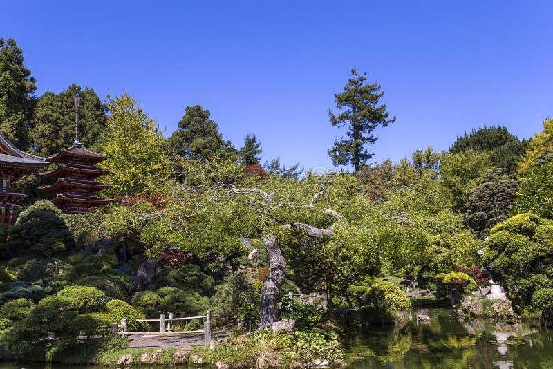 Czerwona pagoda i drzewa w japończyku uprawiamy ogródek obrazy royalty free