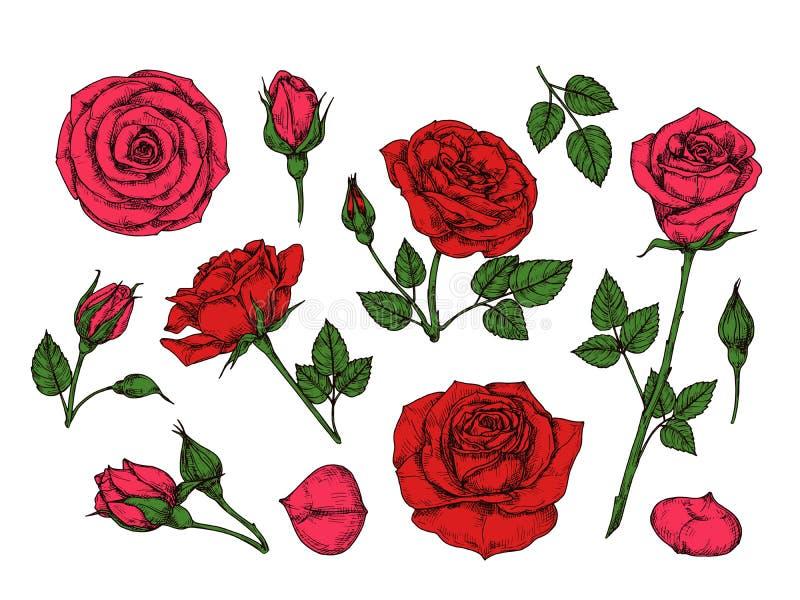 czerwona róża E r ilustracja wektor