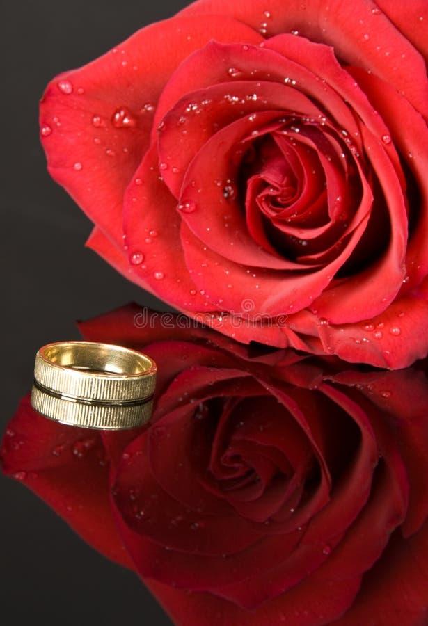 czerwona róża na ringu fotografia stock