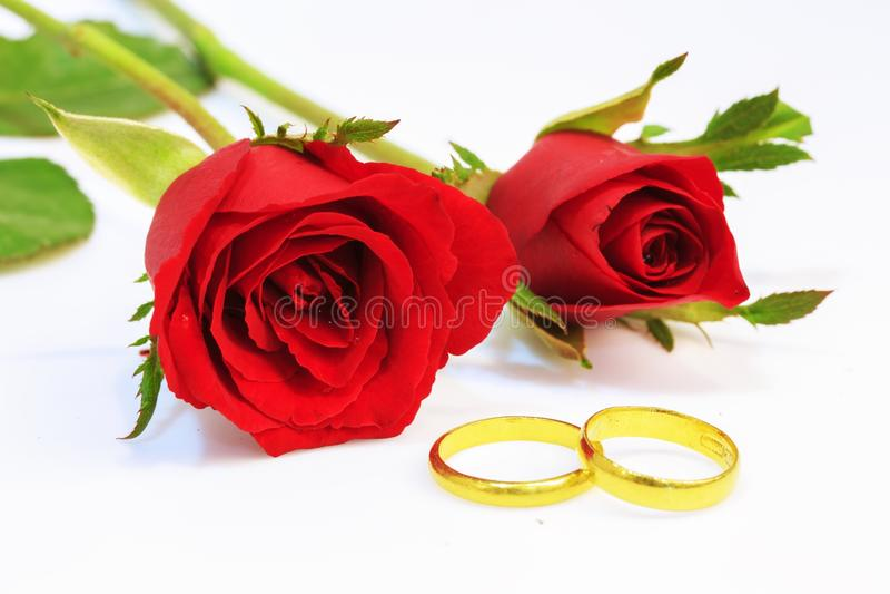 czerwona róża próbach ślubu fotografia royalty free
